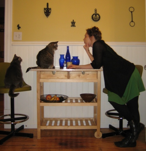 cats in the kitchen with blue bottles